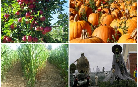 Best of Fall: Attractions and Activities
