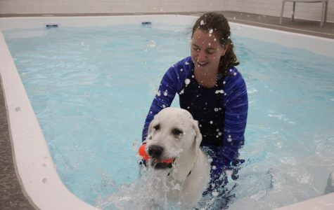 Local dogs take a dip in Naperville's dog exclusive water park